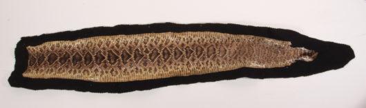 Skin of a Rattlesnake